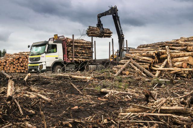 Modernización del transporte forestal // La industria de la madera apuesta por el crecimiento